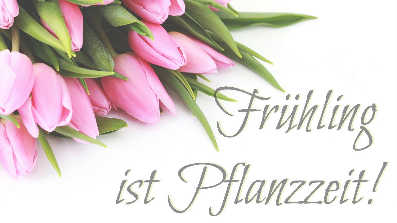 Frühling, Pflanzzeit, Tulpen